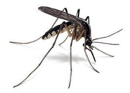 Zika le virus arrive en France transmis par relation sexuelle